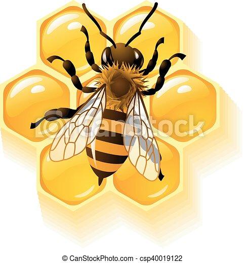 Vector bee and honeycombs - csp40019122