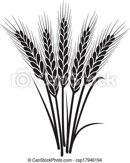 vector black and white bunch of wheat ears  - csp17946194