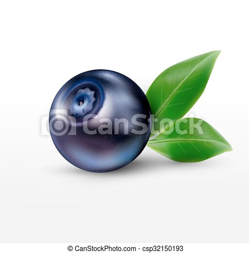 vector blueberries isolated on a white background - csp32150193
