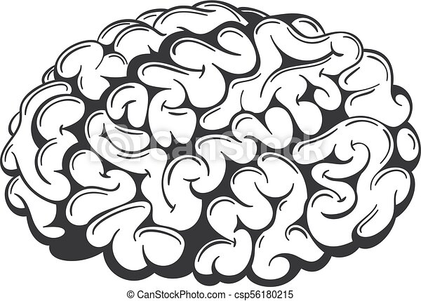 vector brain drawing simple hand drawn vector human brain rh canstockphoto ca