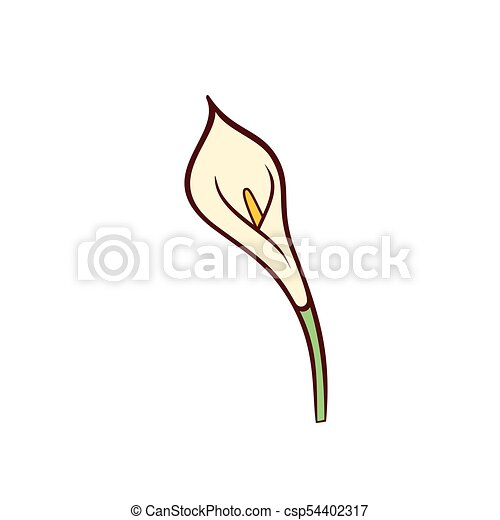 Vector Calla Lily Flower Icon In Flat Style Vector Calla Lily