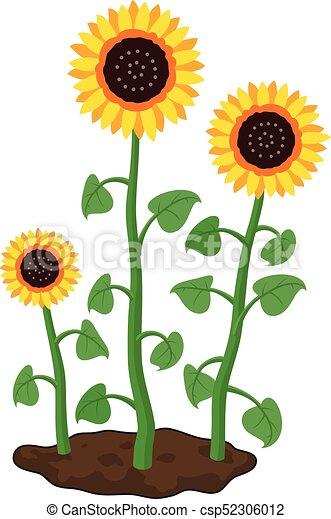 Vector Cartoon Of Garden Sunflowers Grow In Soil