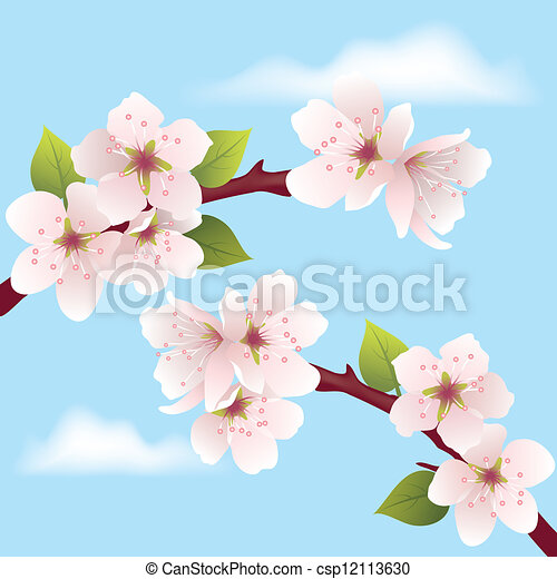 vector cherry branch - csp12113630
