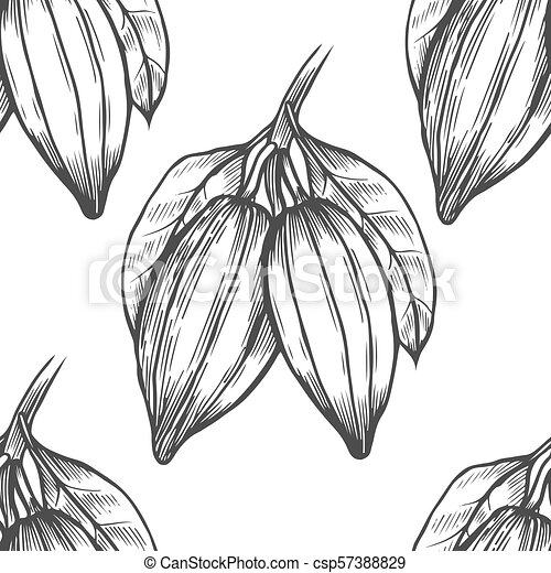 Vector cocoa tree illustration vintage background with hand drawn vector cocoa tree illustration vintage background with hand drawn with leaves flowres fruits and beans botanical seamless pattern aromatical and tonic thecheapjerseys Gallery