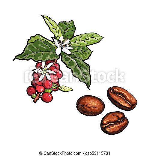 Plant Drawing Botanical Illustration Leaves