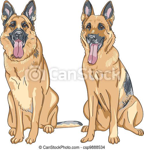 Vector Color Sketch Dog German Shepherd Breed Portrait Of A Dog - German-shepherd-drawings