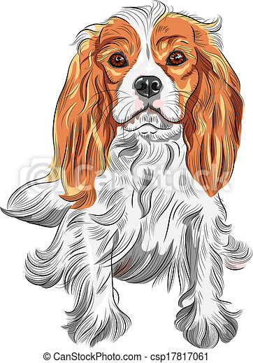 Vector color sketch of the dog Cavalier King Charles Spaniel bre - csp17817061