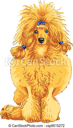 vector color sketch of the dog red Poodle breed - csp9515272