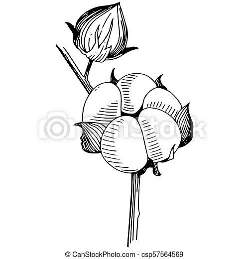 Vector Cotton Floral Botanical Flower Wild Spring Leaf Wildflower