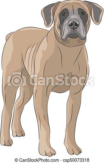 Vector  Dog Boerboel