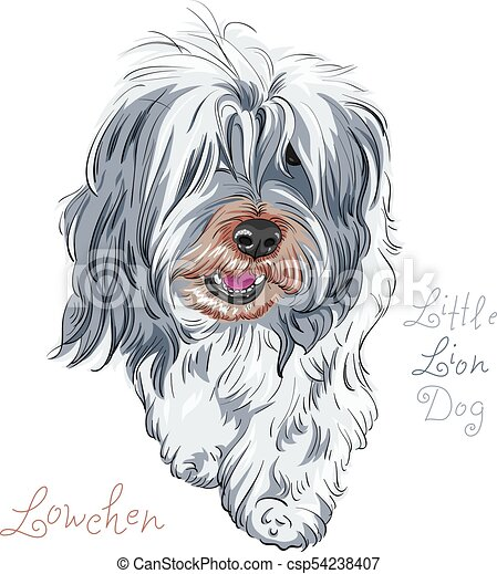vector dog breed Lowchen - csp54238407