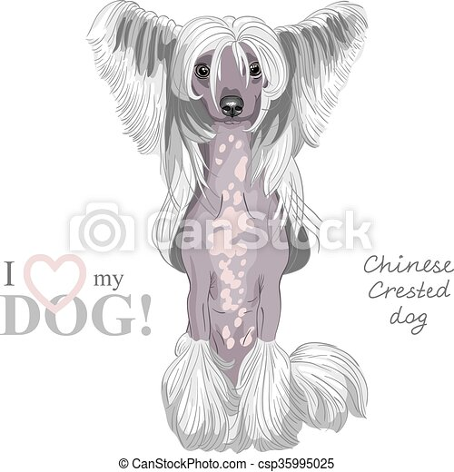 vector dog Chinese Crested breed - csp35995025