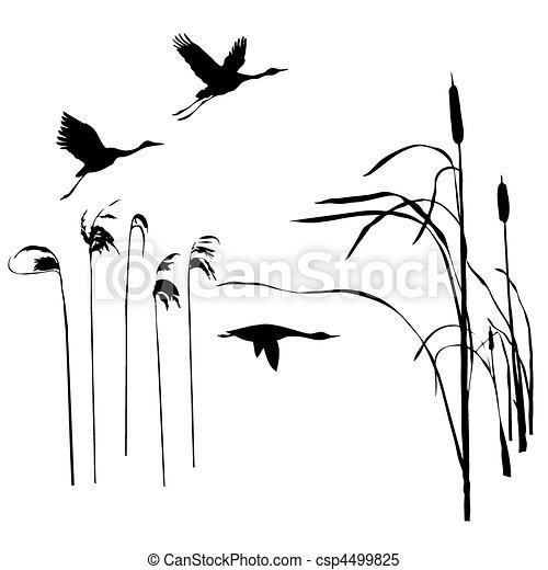 vector drawing flying birds  - csp4499825