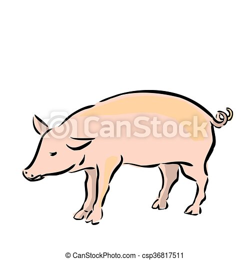 Vector Drawing of a Pig on a White Background - csp36817511