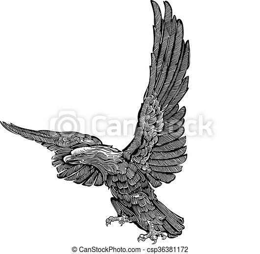 Vector - eagle engraving - csp36381172