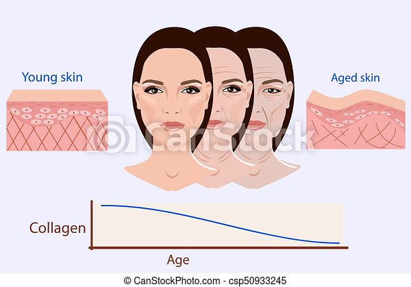 Vector face and two types of skin - aged and young for medical and cosmetological illustrations isolated - csp50933245