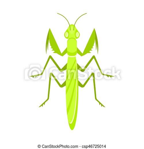 Vector flat style illustration of mantis - csp46725014