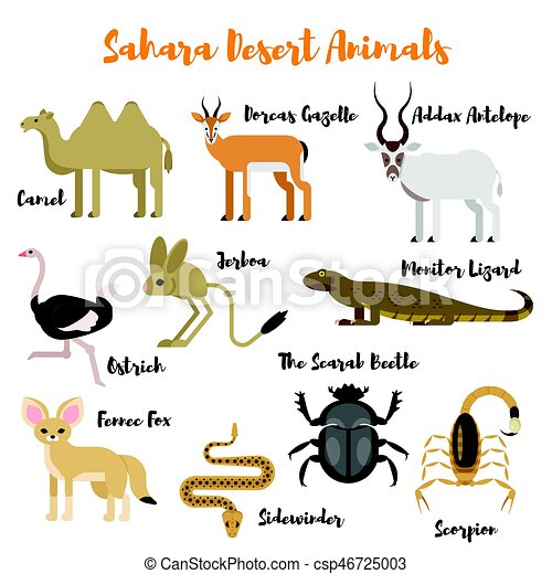 Vector Flat Style Set Of Desert Wild Animals Icon For Web Isolated