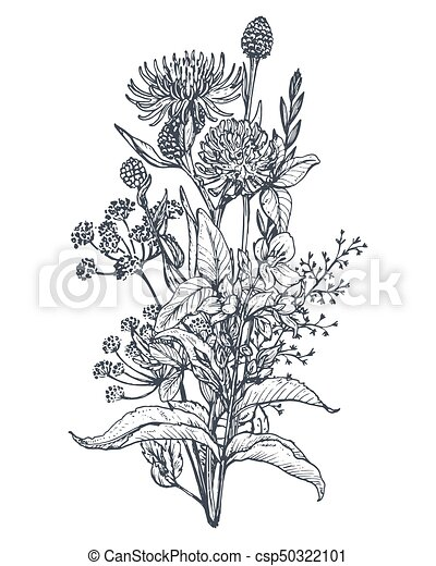 White Flower PNG Transparent For Free Download - PngFind