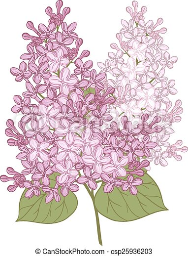 Vector flowers of lilac. Illustration for design. - csp25936203