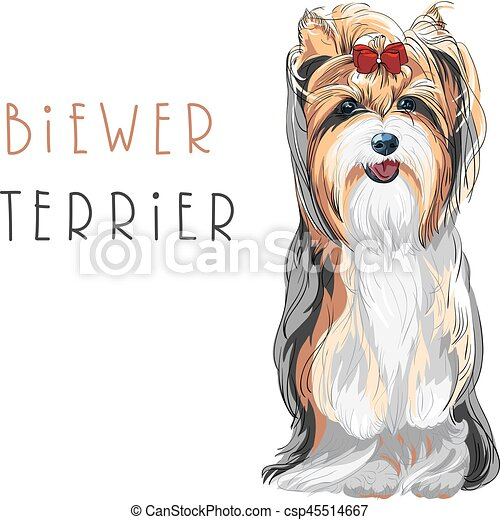 Vector Funny Biewer Yorkshire Terrier Dog Sitting Cute Funny Dog