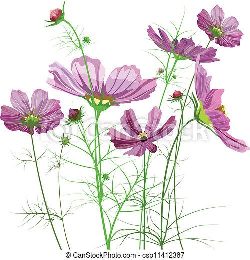 vector garden flowers cosmos bipinnatus stock illustration_csp11412387