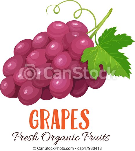 Vector grapes illustration - csp47938413