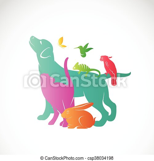 Vector group of pets - Dog, cat, parrot, chameleon, rabbit, butterfly, hummingbird isolated on white background, / Vector pets for your design. - csp38034198