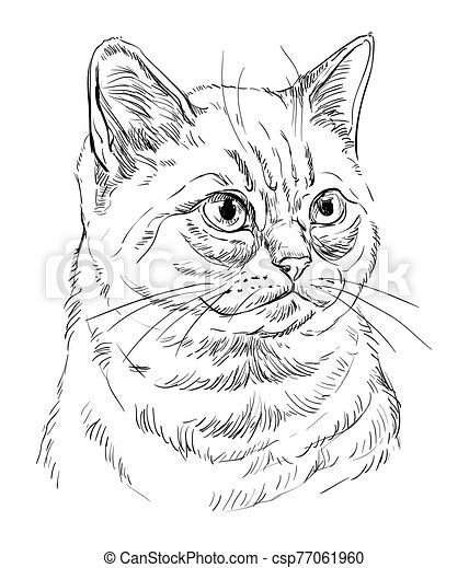 Vector hand drawing cat 7 - csp77061960