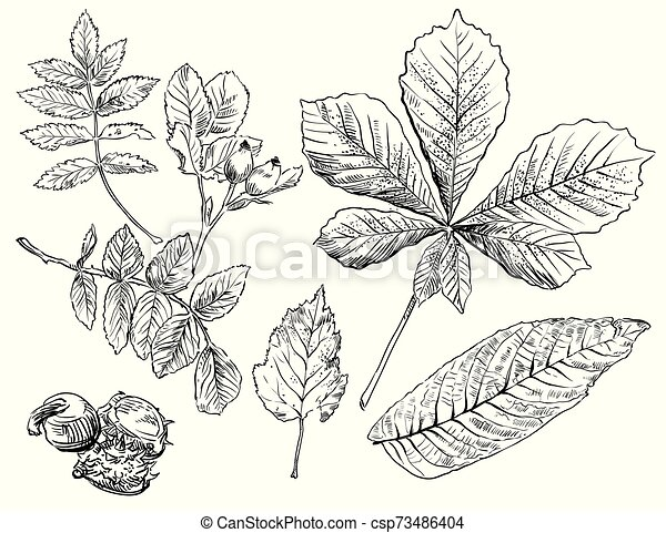 Horse-Chestnut Leaf | ClipArt ETC