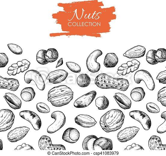 Vector hand drawn nuts illustration. - csp41083979