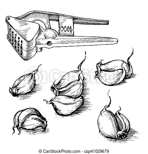 Vector hand drawn set of garlic cloves with press. Spices sketch illustration isolated on white background - csp41029679