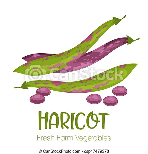 Vector haricot isolated on white background.Vegetable illustration for farm market menu. Healthy food design poster. Cartoon style vector illustration - csp47479378