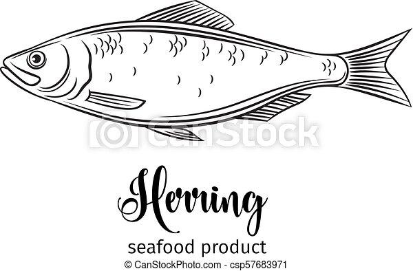 Vector Herring