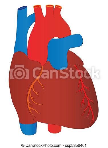 vector human heart medical anatomy rh canstockphoto com Medical Heart Drawing Medical Logos Symbols Vector