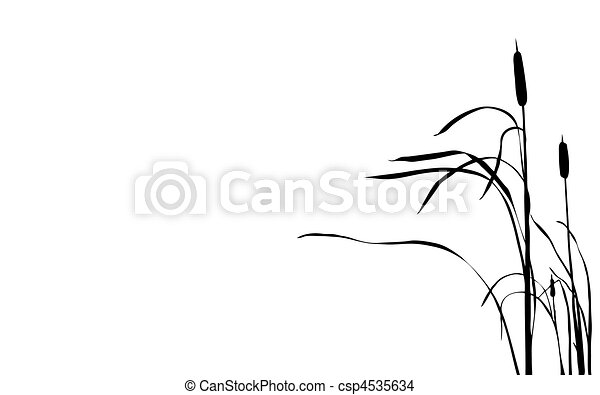 vector illustration bulrush on white background - csp4535634