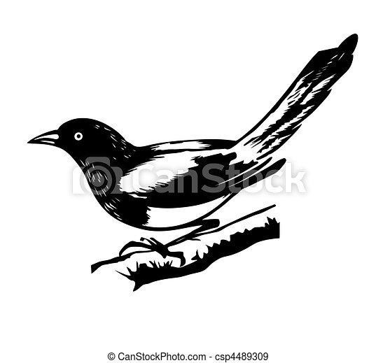 vector illustration magpie - csp4489309