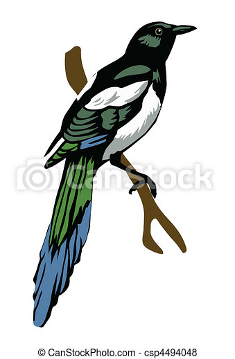 vector illustration magpie on white background - csp4494048