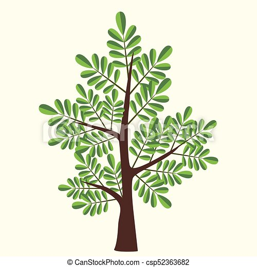 Vector Illustration Of Acacia Tree With Two Color Leaves On Light Yellow