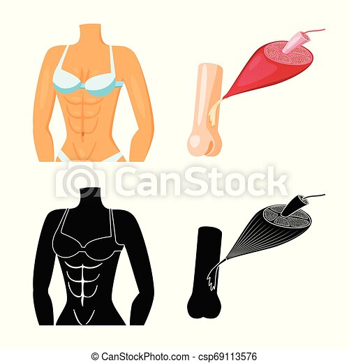 Vector illustration of fiber and muscular symbol. Set of fiber and body stock symbol for web. - csp69113576
