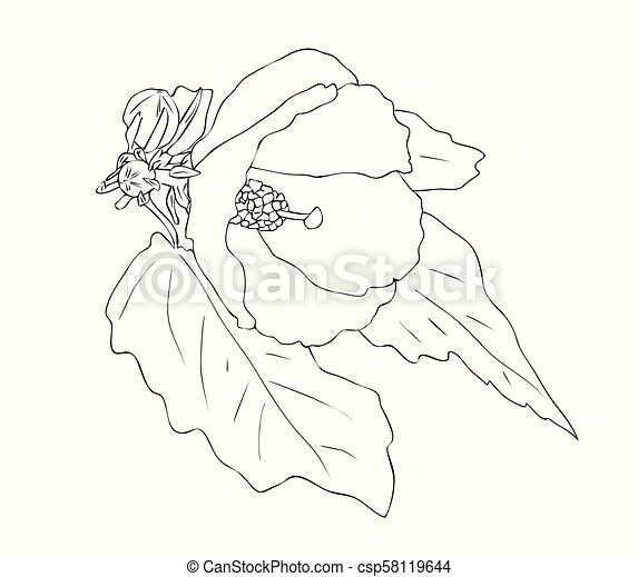 Vector Illustration Of Hibiscus Flower Vector Illustration Isolated Hibiscus Flower In Black And White Colors Outline Hand Canstock