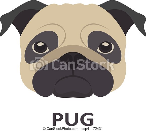Vector illustration of pug in flat style. - csp41172431