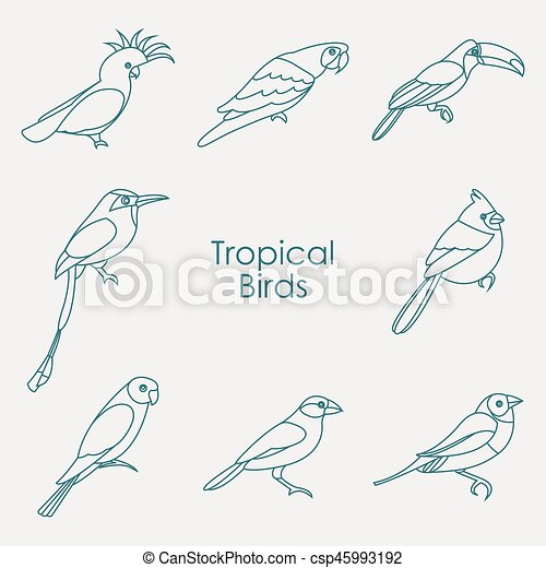 Vector illustration of tropical birds icon - csp45993192