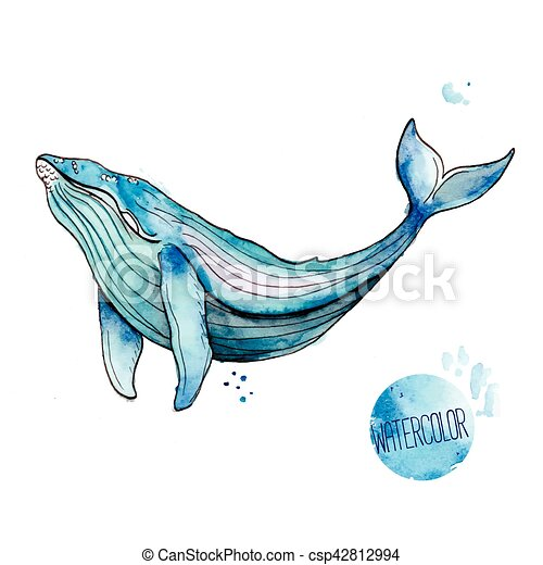 Vector illustration of watercolor whale on white background - Baleine dessin ...