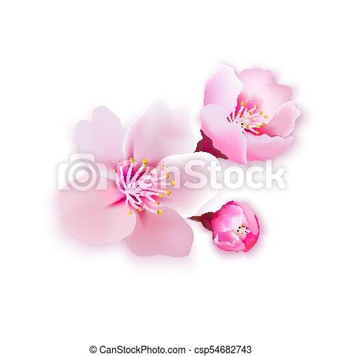 Vector illustration sakura cherry, branch with blooming flowers, - csp54682743