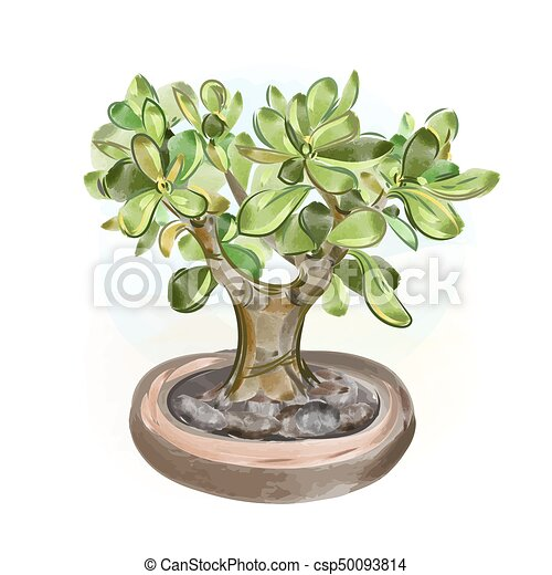 Vector Illustrations Watercolor Money Tree Bonsai Hand Draw Japanese Tree Watercolor Money Tree Bonsai Hand Draw Japanese Canstock