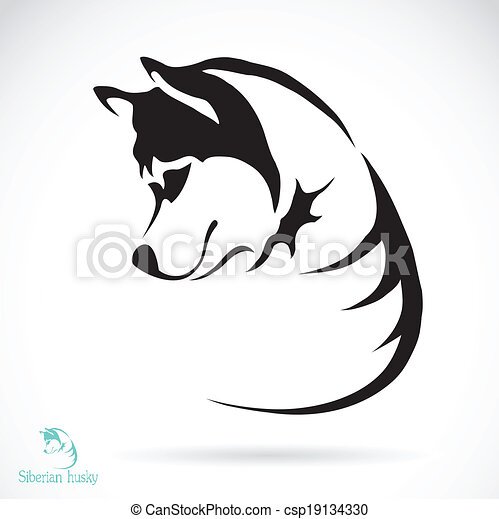 Vector image of a dog siberian husky - csp19134330