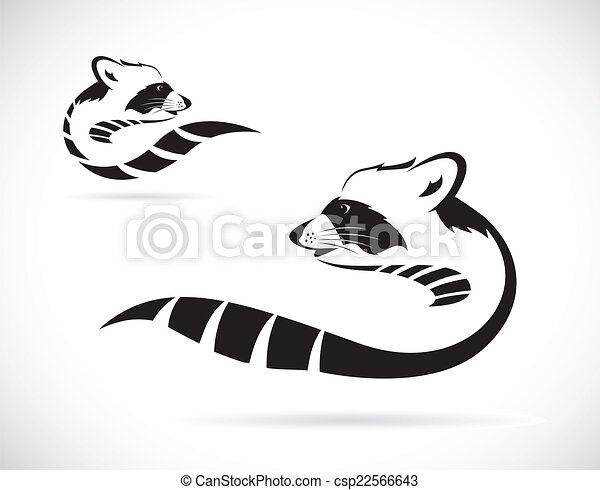 Vector image of a raccoon on white background - csp22566643