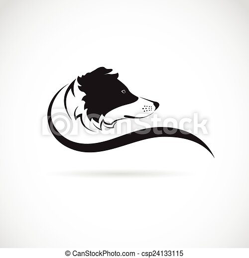 Vector image of an border collie dog on white background - csp24133115
