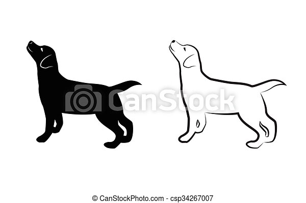 Vector image of an dog labrador on white background - csp34267007